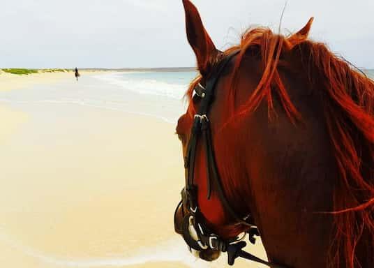 Praia, Roheneemesaared