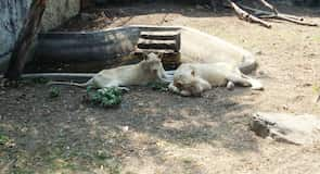 Samutprakarn Krokodillefarm og Zoo