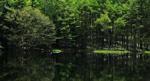 Mishaka Pond