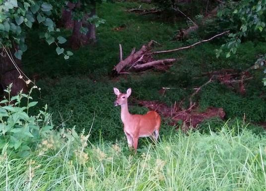 Wolf Trap, Virginia, Birleşik Devletler
