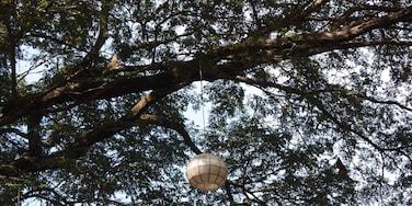 The lost lantern .....
