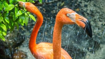 Oranżeria