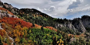 Autumn at the top of the Sandia Mountains in Albuquerque, NM is not to be missed if you happen to visit at just the right time.  Hope you're not afraid of heights.    #CeliaLuzPhotography #autumn #Albuquerque #NewMexico #trees #landscape #nature #Hike #Sandias #fall #travel #places #seasons #BestHikesAroundtheWorld