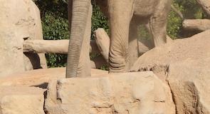 Zoológico Bioparc Valencia