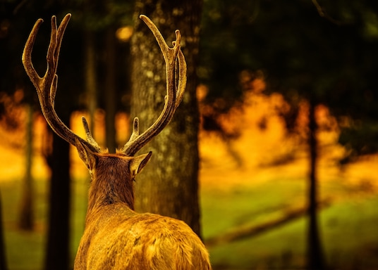 Pine Mountain, Georgia, United States of America