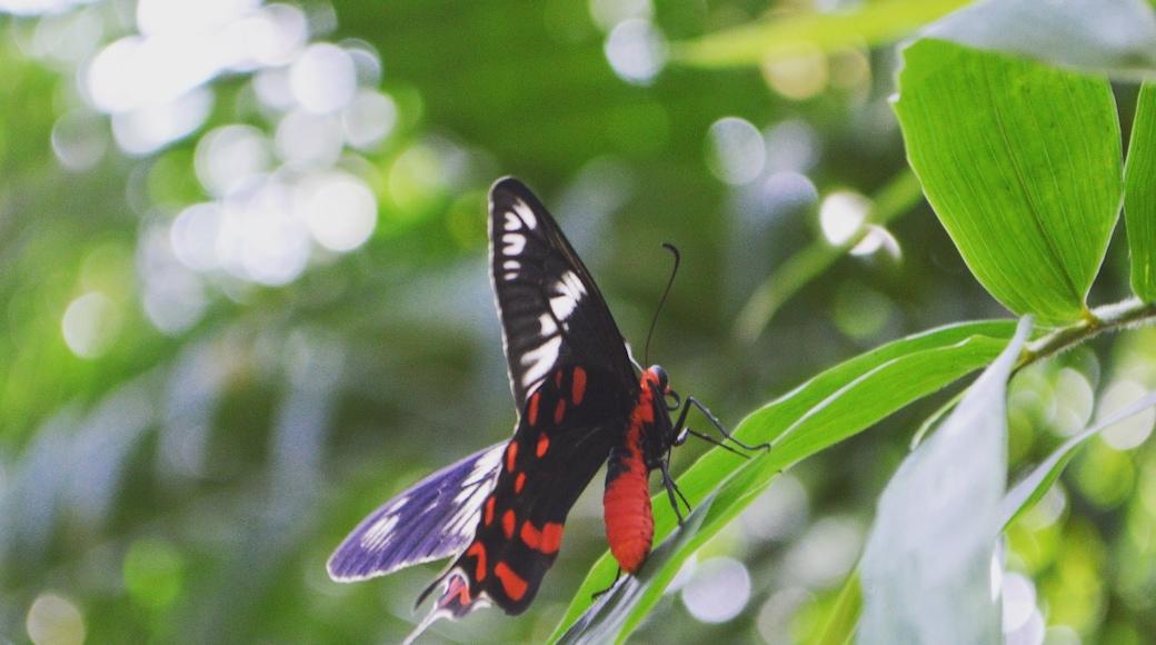 Photo by Bikash Pradhan
