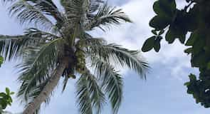 Ostrov Lang Tengah