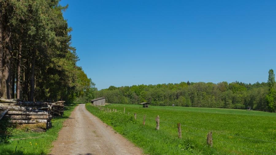 "Photo ""Dirt road called Wood Mountain (Holzberg) at Maiburg forest near Bippen, Samtgemeinde Fürstenau, Landkreis Osnabrück, Lower Saxony, Germany."" by J.-H. Janßen (Creative Commons Attribution-Share Alike 4.0) / Cropped from original"