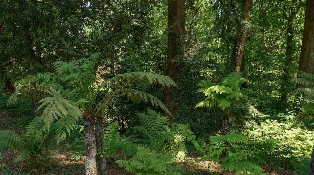 «Bois des Moutiers», photo de TerraPulchra (page does not exist) (CC BY-SA) / rognée de l'originale