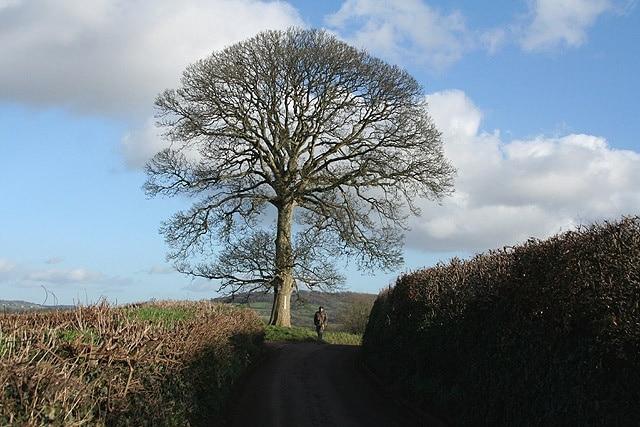 Uffculme, Cullompton, England, United Kingdom
