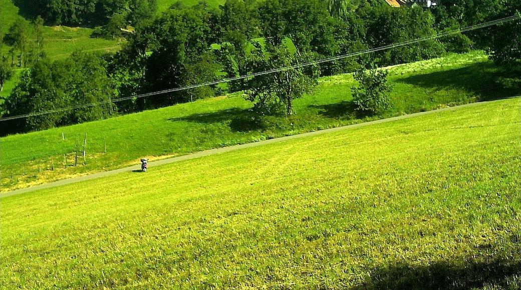 «Glottertal», photo de pictures Jettcom (CC BY) / rognée de l'originale