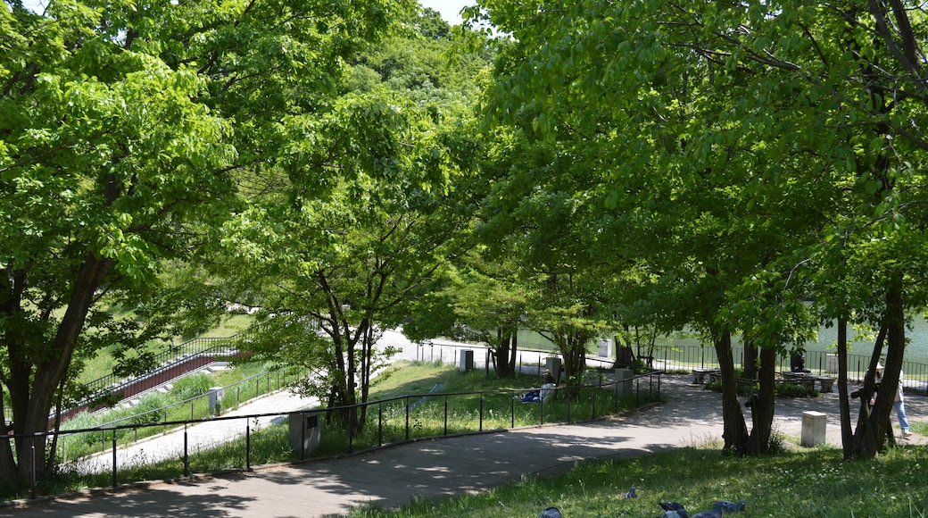 "KΛNΛTΛ 님의 ""나가이케 공원"" 사진(CC BY-SA) / 원본에서 잘라냄"