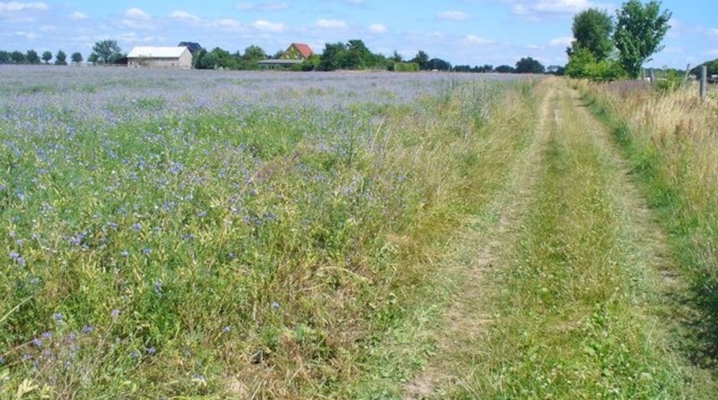 «Mühlenbecker Land», photo de Colin Smith on geo.hlipp.de (CC BY-SA) / rognée de l'originale