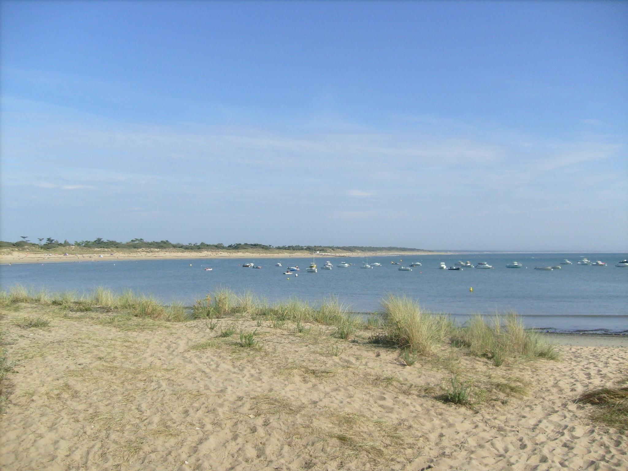 La Rémigeasse, Dolus-d'Oleron, Charente-Maritime, France