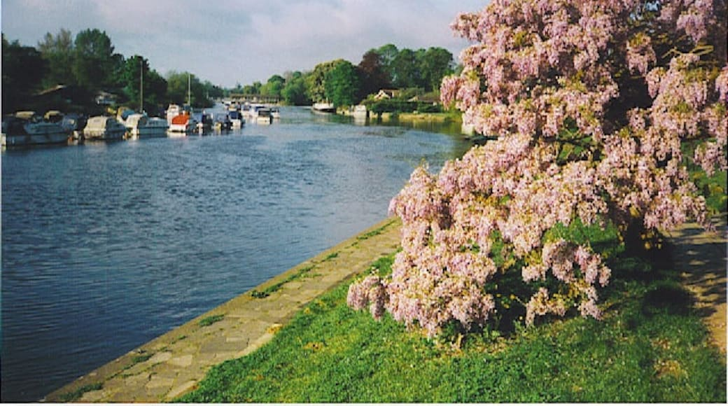 """Photo """"Sunbury on Thames"""" by Colin Smith (CC BY-SA) / Cropped from original"""