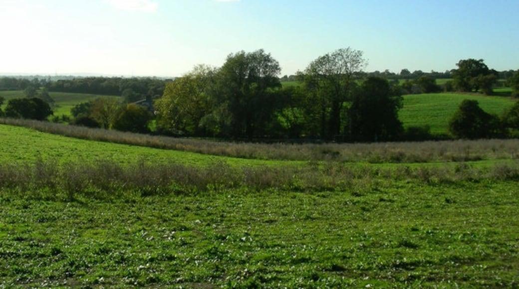 Foto 'Brentwood' van John Winfield (CC BY-SA) / bijgesneden versie van origineel