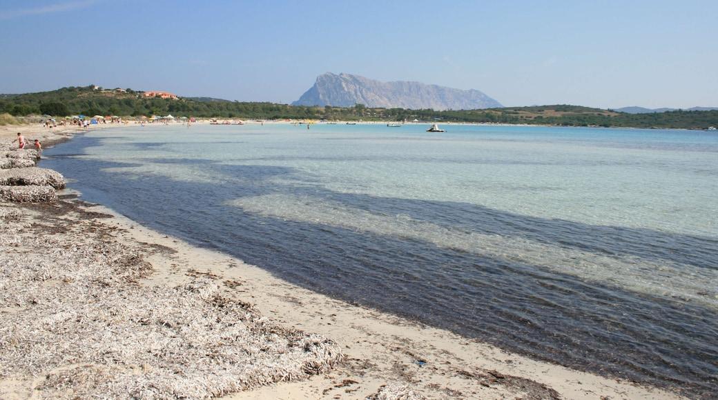 """Foto """"Playa de Cala Brandinchi"""" por Carlo Pelagalli (CC BY-SA) / Recortada de la original"""