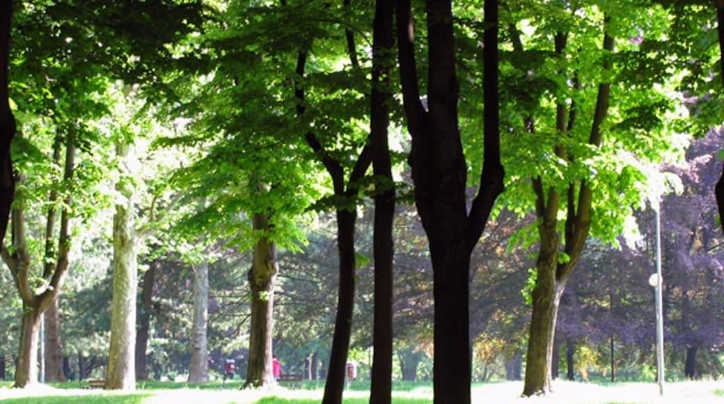 Foto 'Monza' van Zhang Yuan (CC BY) / bijgesneden versie van origineel