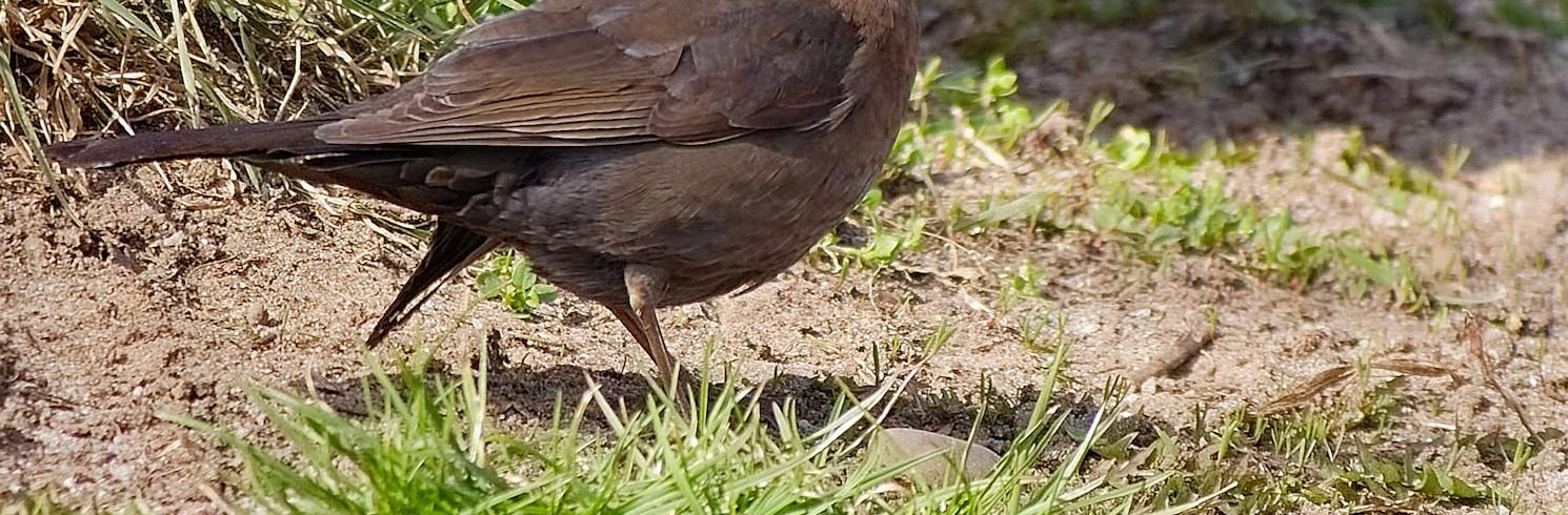 Vogelstang, Jerman
