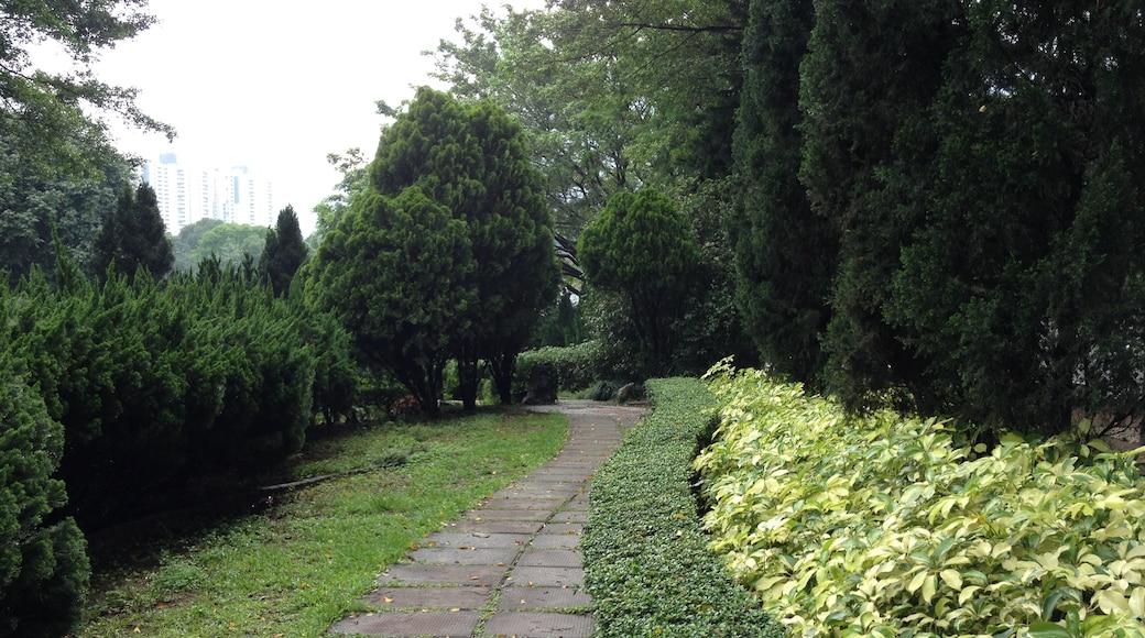 屯門市鎮公園(小徑一)