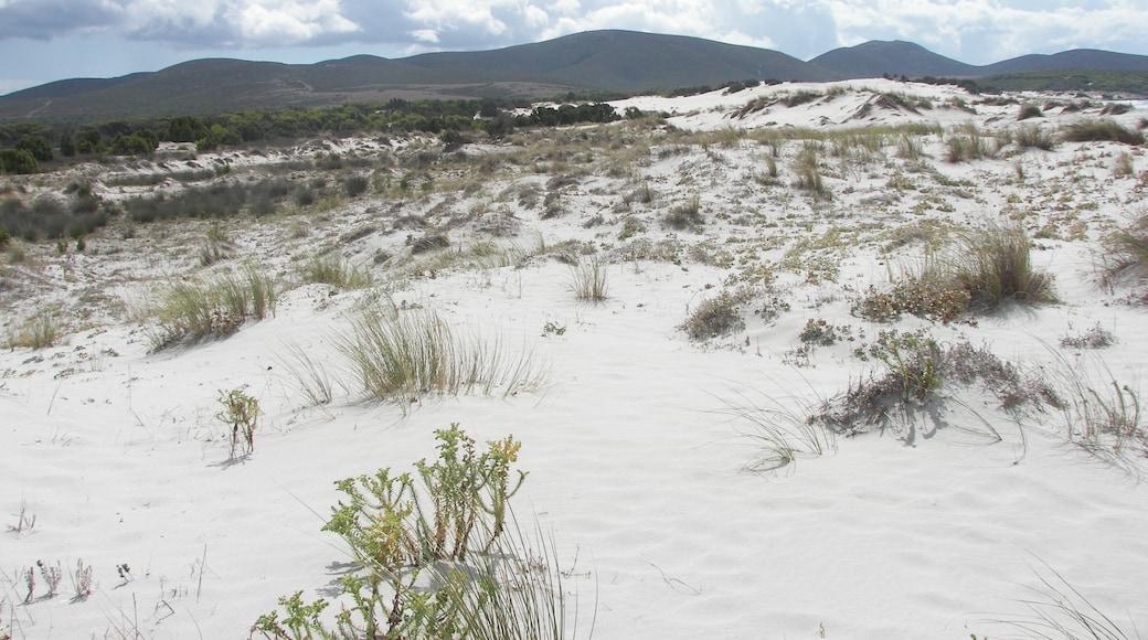 """ภาพ """"หาด Is Arenas Biancas"""" โดย gian luca bucci (CC BY) / ตัดภาพจากขนาดต้นฉบับ"""