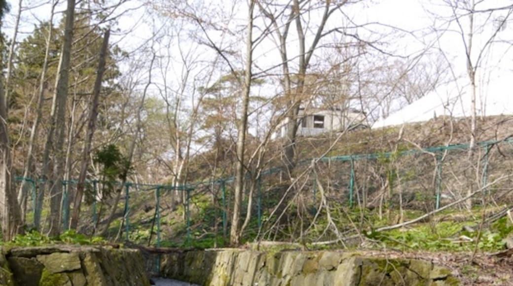 """Foto """"Parque de Maruyama"""" de kazppi77 (CC BY) / Recortada do original"""