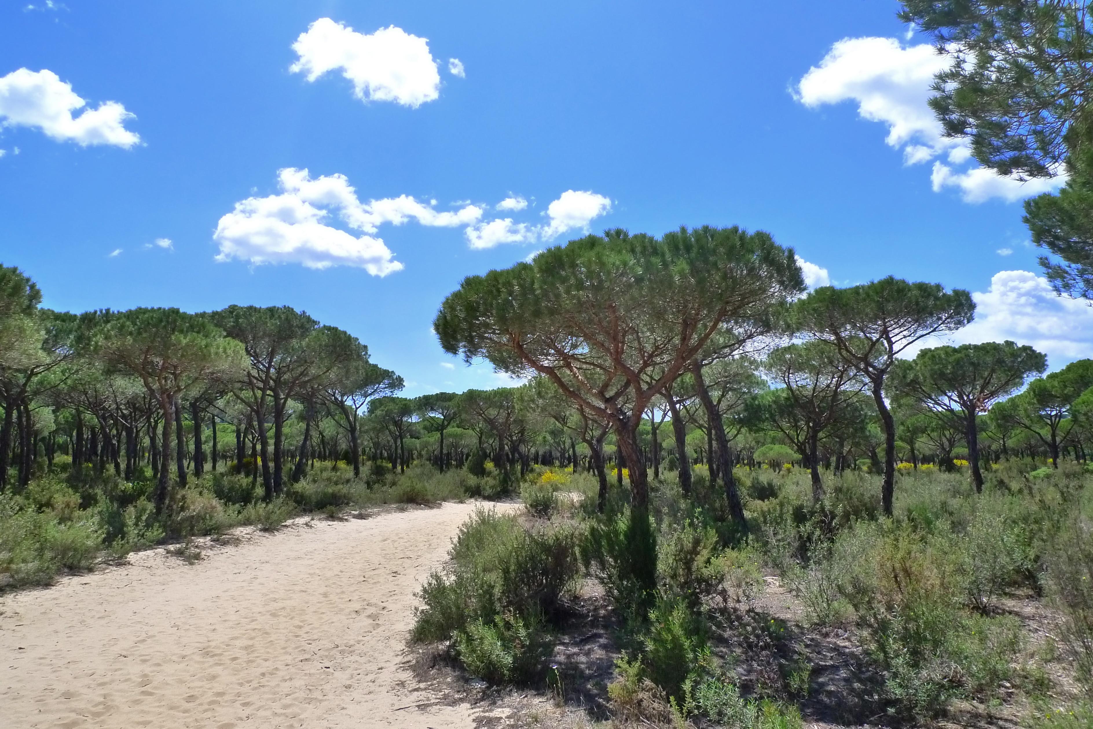 Matalascañas, Andaluzia, Espanha