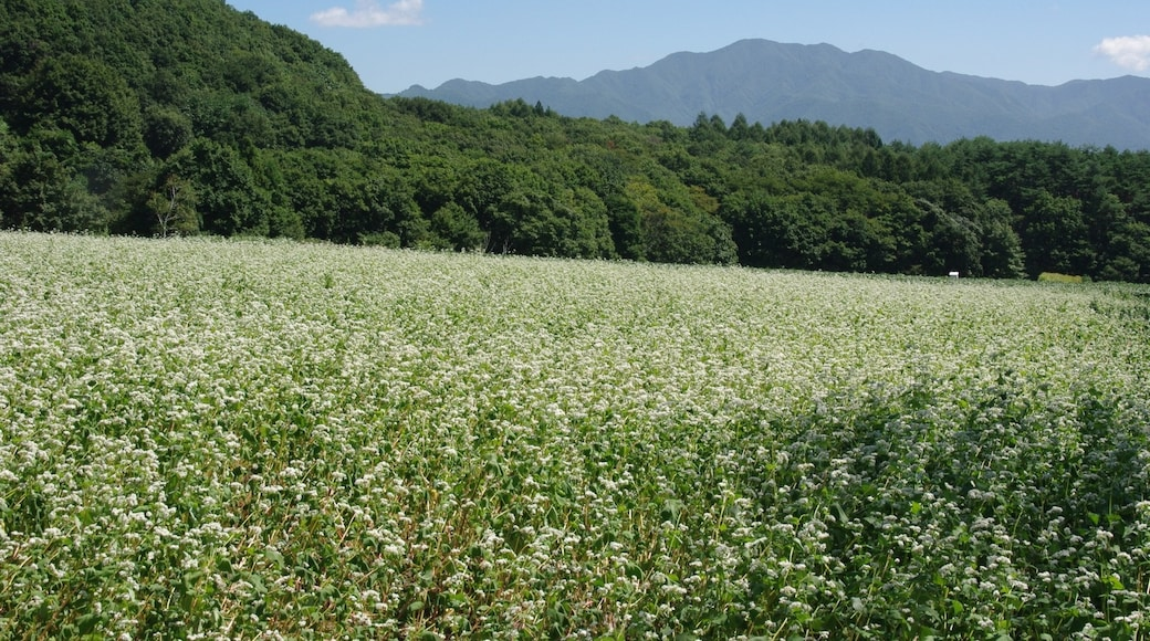 """Photo """"Inawashiro"""" by Kuratch (CC BY-SA) / Cropped from original"""