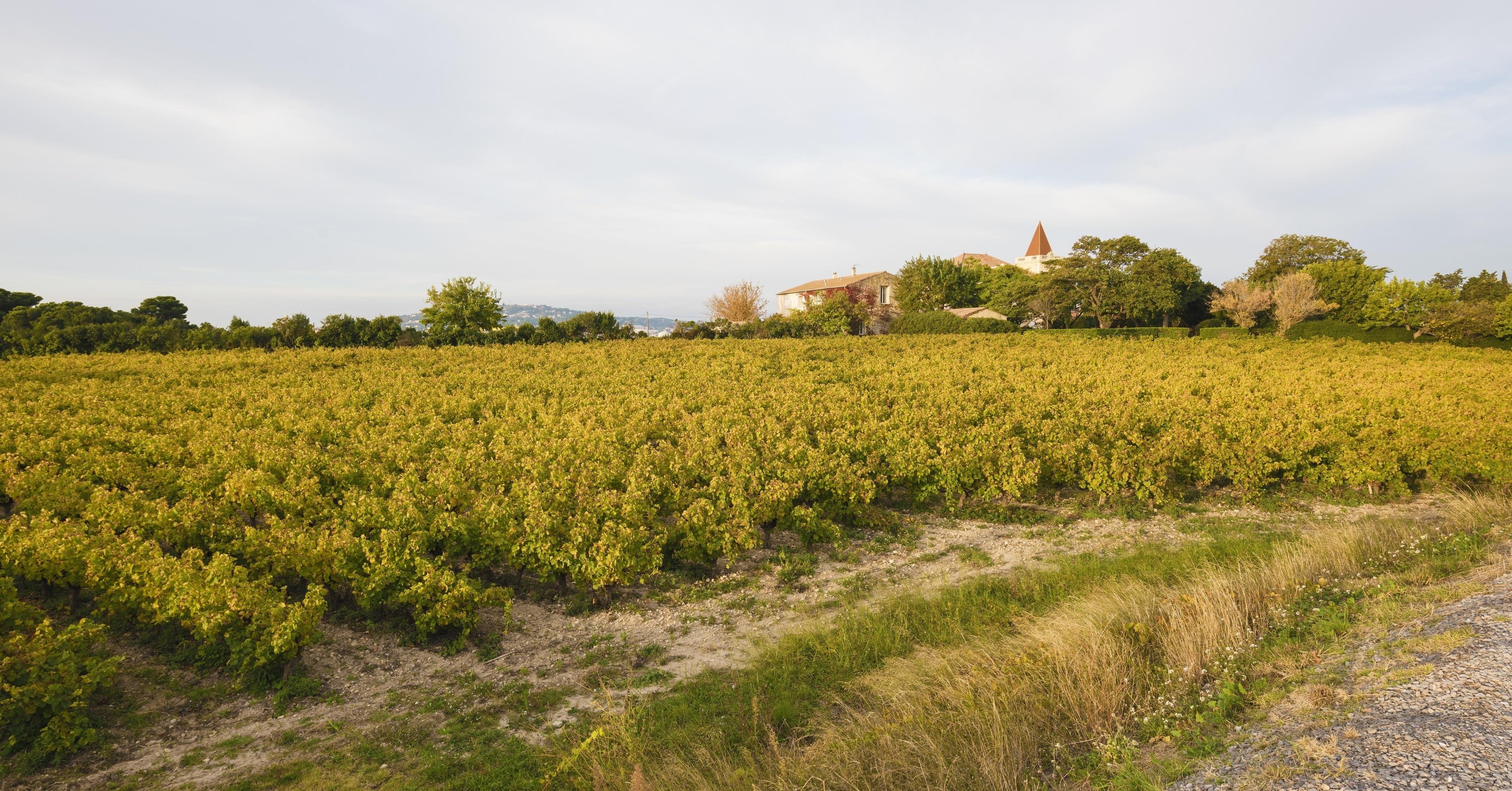 Frontignan, Hérault (departement), Frankrijk