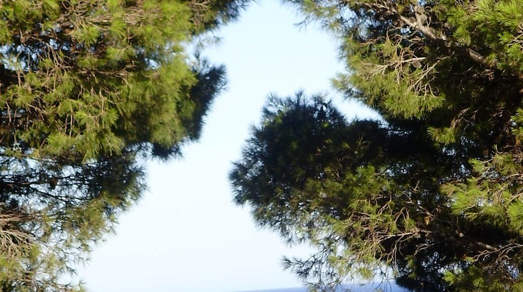 """Foto """"Colera"""" von klimmanet (CC BY)/zugeschnittenes Original"""