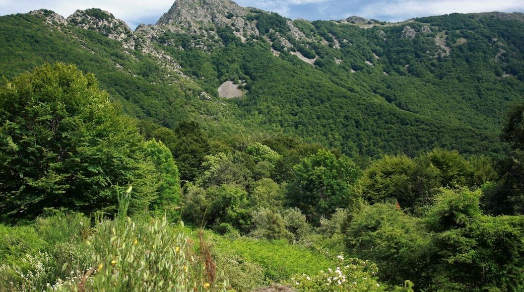 """""""Montseny""""-foto av Jorge Franganillo (CC BY) / Urklipp från original"""