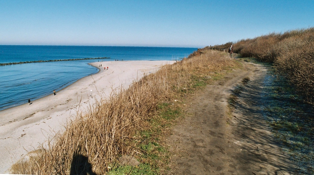 """Photo """"Ostseebad Ahrenshoop"""" by Dguendel (page does not exist) (CC BY) / Cropped from original"""
