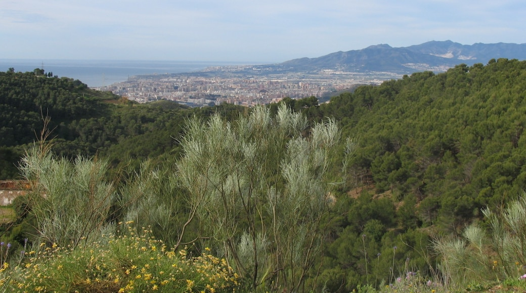 """Photo """"Parque Natural Montes de Malaga"""" by Juan Pablo Olmo (CC BY) / Cropped from original"""