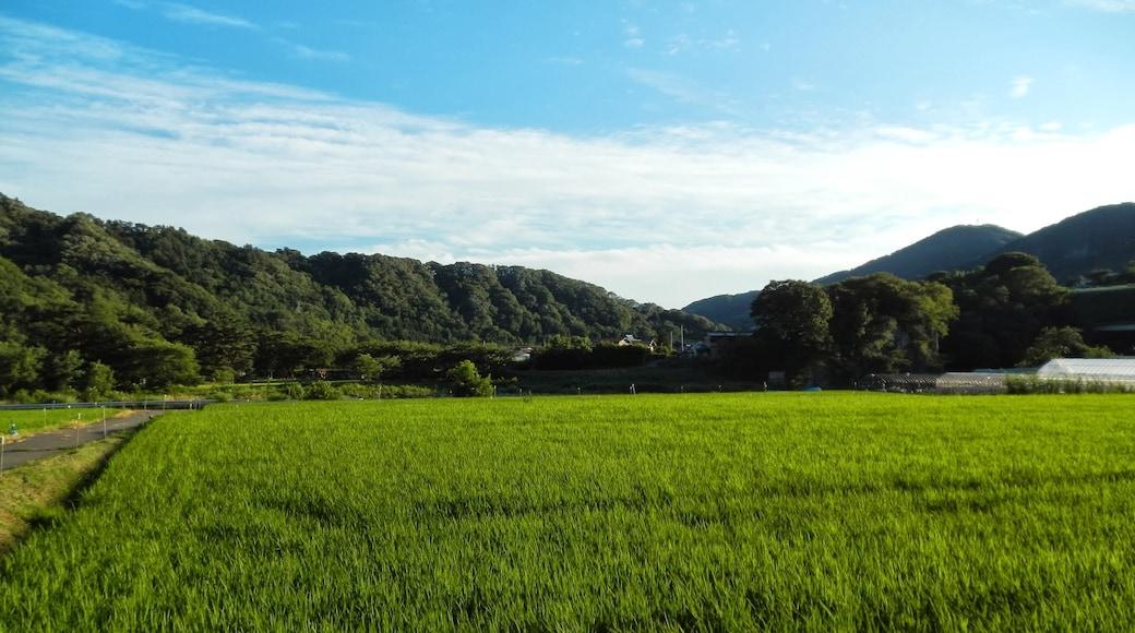 """Foto """"Shibukawa"""" de kiwa dokokano (CC BY-SA) / Recortada do original"""