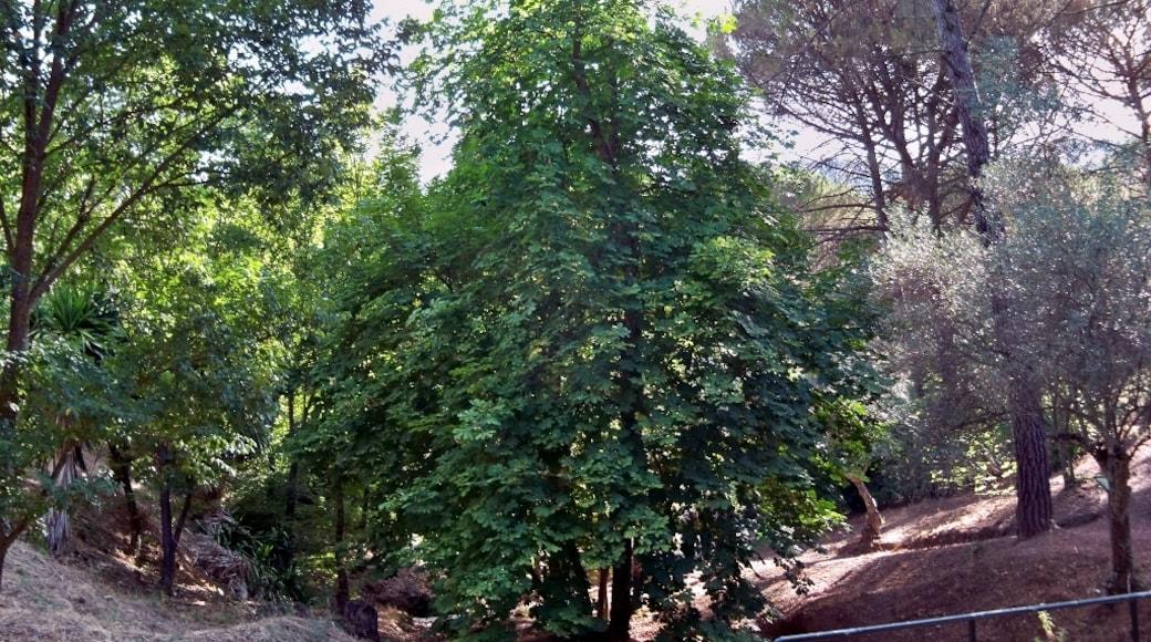 "Photo ""Parque Natural Montes de Malaga"" by Dcapillae (CC BY-SA) / Cropped from original"