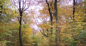 Haigh Country Park