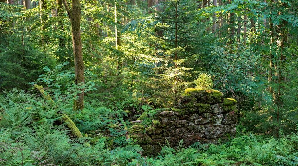 """Foto """"Waldbrunn"""" von Aristeas (CC BY-SA)/zugeschnittenes Original"""