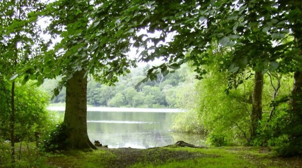 """Photo """"Bolam Lake Country Park"""" by Newbiggin Hall Scouts (CC BY-SA) / Cropped from original"""