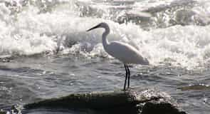 شاطئ ميلونيراس