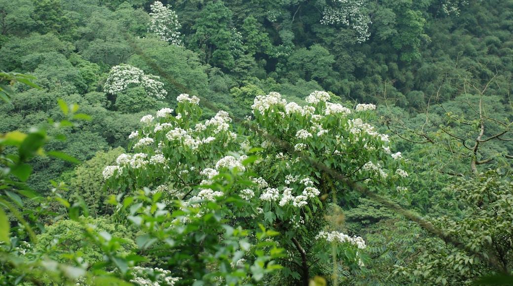 徐月春 (CC BY) 的「峨嵋」相片 / 裁剪自原有相片