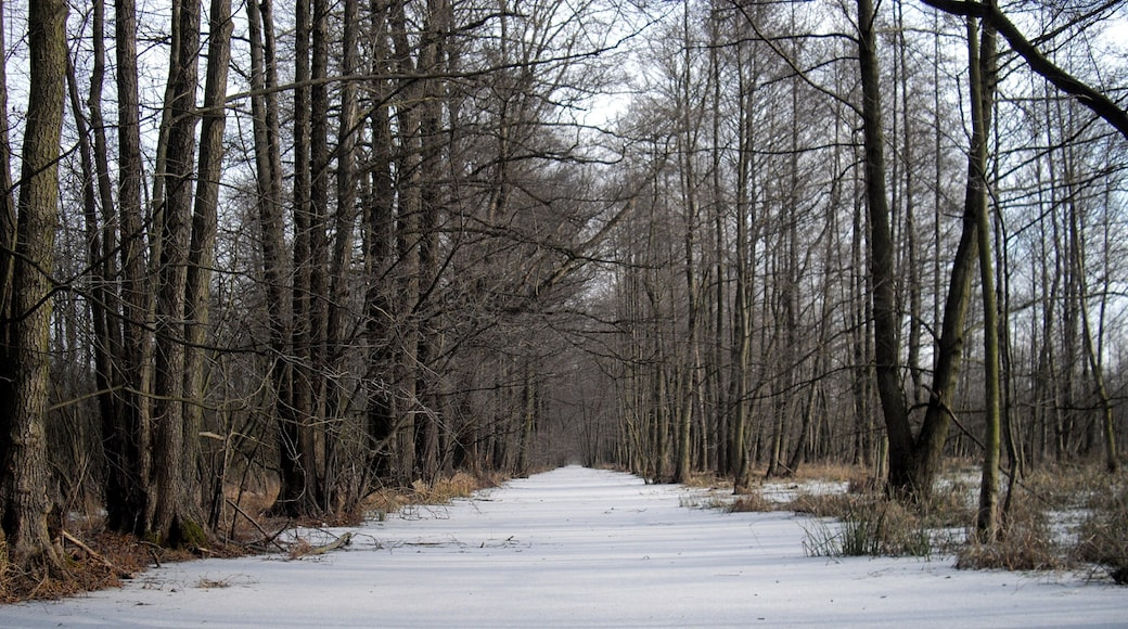 """Foto """"Lübbenau/Spreewald"""" von G.Elser (CC BY)/zugeschnittenes Original"""