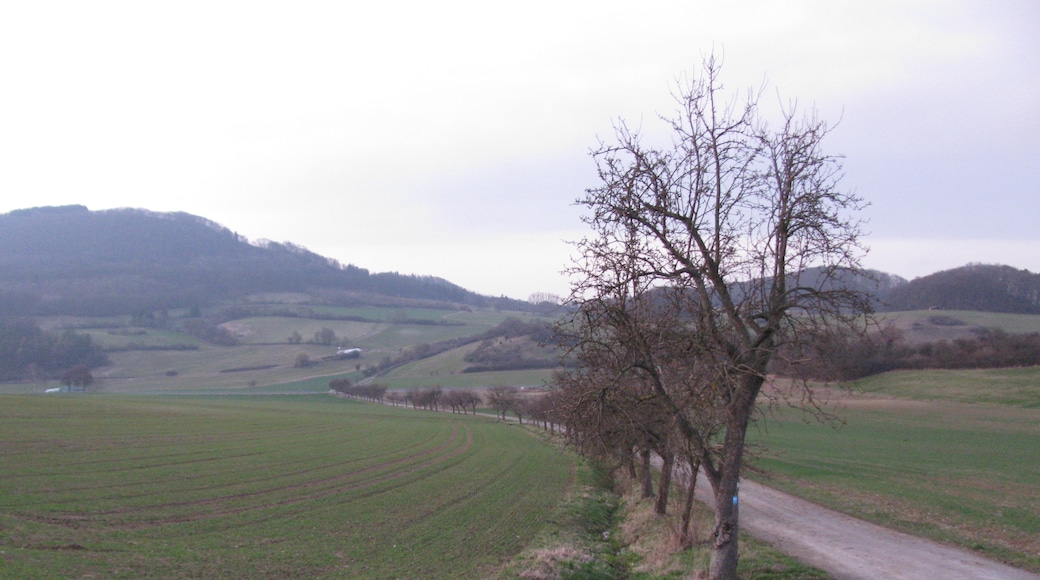 """Foto """"Habichtswälder Bergland"""" von GeorgDerReisende (page does not exist) (CC BY-SA)/zugeschnittenes Original"""