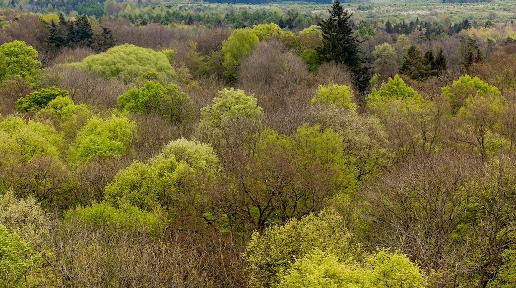 """Foto """"Nationalpark Hainich"""" von Dietmar Rabich (CC BY-SA)/zugeschnittenes Original"""