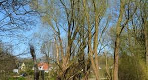 Neumuenster