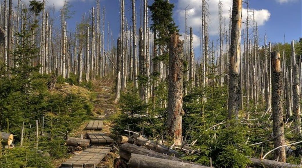 """Foto """"Nationalpark Bayerischer Wald"""" von Christian Lipp on geo.hlipp.de (CC BY-SA)/zugeschnittenes Original"""