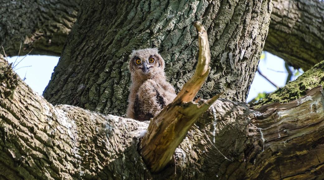 "Foto ""Naturschutzgebiet Duvenstedter Brook"" von Hans Robert Wolters (page does not exist) (CC BY-SA)/zugeschnittenes Original"