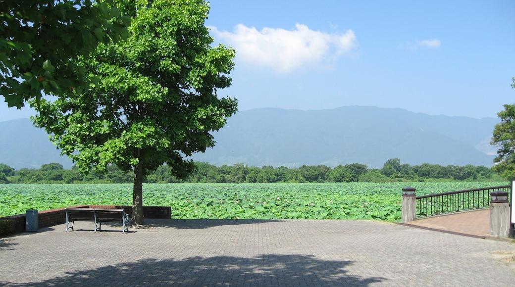 "Photo ""Kaizu"" by Hamachidori (CC BY-SA) / Cropped from original"