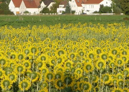 Limburgerhof, Duitsland