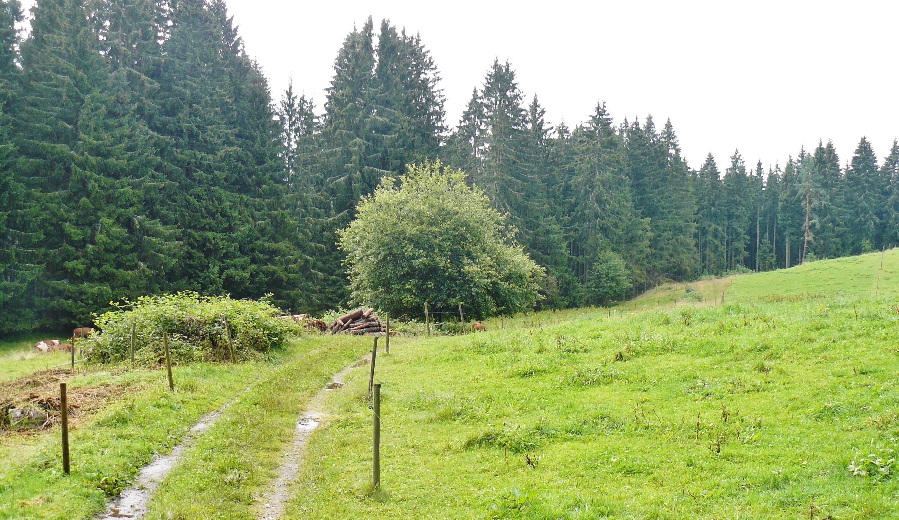 Lenzkirch, Baden-Württemberg, Germany