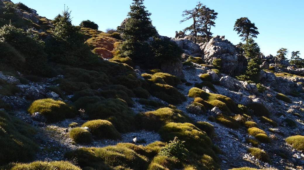 """Photo """"Sierra de las Nieves"""" by Yabedanie (page does not exist) (CC BY-SA) / Cropped from original"""